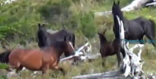 a caballos yendegaia